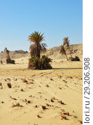 Landscape of the Western desert Sahara, Egypt (2008 год). Стоковое фото, фотограф Знаменский Олег / Фотобанк Лори