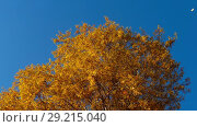 Купить «Autumn trees with yellowing leaves against the sky», видеоролик № 29215040, снято 29 сентября 2018 г. (c) Игорь Жоров / Фотобанк Лори