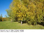 Купить «Осенний парк солнечным днем», фото № 29224108, снято 12 октября 2018 г. (c) Елена Коромыслова / Фотобанк Лори