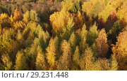 Купить «flight on beautiful autumn city park in Moscow Russia», видеоролик № 29231448, снято 18 ноября 2019 г. (c) Володина Ольга / Фотобанк Лори