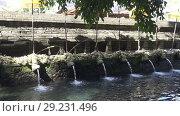 Купить «Holy spring water in Tirta Empul temple, a Hindu Balinese water temple located near the town of Tampaksiring, Bali, Indonesia», видеоролик № 29231496, снято 9 октября 2008 г. (c) Куликов Константин / Фотобанк Лори