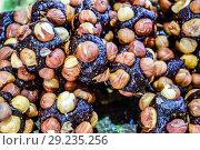 Купить «Slices of marmalade with hazelnuts. Hazelnut with sweets.», фото № 29235256, снято 21 марта 2019 г. (c) Леонид Еремейчук / Фотобанк Лори