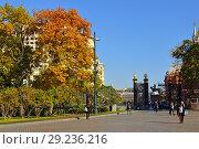 Купить «Golden autumn in Alexander Gardens. Urban park. Москва», фото № 29236216, снято 15 октября 2018 г. (c) Валерия Попова / Фотобанк Лори