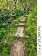 Купить «Boardwalk on the Alakai Swamp Trail, Kokee State Park, Kauai, Hawaii USA.», фото № 29240148, снято 16 февраля 2019 г. (c) age Fotostock / Фотобанк Лори