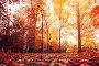 Купить «Autumn city landscape. Autumn trees in sunny autumn park lit by sunshine and fallen maple leaves on the foreground», фото № 29240240, снято 15 октября 2018 г. (c) Зезелина Марина / Фотобанк Лори