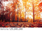 Купить «Autumn city landscape. Autumn trees in sunny autumn park lit by sunshine and fallen maple leaves on the foreground», фото № 29240240, снято 15 октября 2018 г. (c) Зезелина Марина / Фотобанк Лори