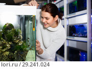 Купить «Girl looking at striped tropical fish in aquarium with rocks and seaweed inside», фото № 29241024, снято 17 февраля 2017 г. (c) Яков Филимонов / Фотобанк Лори