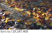 Купить «Бегущий осенний ручеек», видеоролик № 29247468, снято 13 октября 2018 г. (c) Виктор Карасев / Фотобанк Лори
