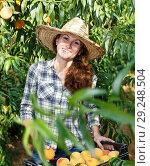 Купить «Woman farmer harvesting peaches», фото № 29248504, снято 12 июля 2018 г. (c) Яков Филимонов / Фотобанк Лори