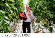 Купить «This summer, Asda has introduced a brand-new type of tomato – the Goutini – after a four-year trial process. Grown in Southport, Asda's experts in tomatoes...», фото № 29251092, снято 23 мая 2018 г. (c) age Fotostock / Фотобанк Лори