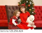Купить «Две девочки с игрушками в руках сидят на фоне новогодней елки», фото № 29256424, снято 24 декабря 2016 г. (c) Ирина Борсученко / Фотобанк Лори