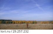 Купить «The Vast Expanses Of Russia. Golden Autumn. Yellow-red forest on a background of blue sky with small cirrus clouds.», видеоролик № 29257232, снято 21 января 2020 г. (c) Константин Мерцалов / Фотобанк Лори
