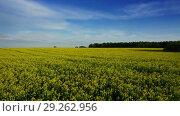 Купить «Landscape with flowering rapeseed field, timelpase», видеоролик № 29262956, снято 5 сентября 2018 г. (c) Михаил Коханчиков / Фотобанк Лори