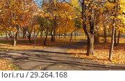 Купить «Moscow, Russia - October 17. 2018. Autumn deciduous park on clear day in Zelenograd», видеоролик № 29264168, снято 25 мая 2019 г. (c) Володина Ольга / Фотобанк Лори