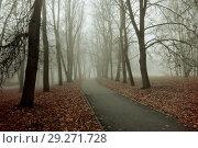 Купить «Fall nature - foggy fall view of fall park alley in dense fog», фото № 29271728, снято 8 ноября 2017 г. (c) Зезелина Марина / Фотобанк Лори