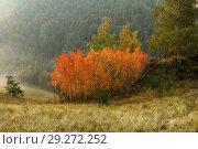 Осинки. Стоковое фото, фотограф Фомина Марина / Фотобанк Лори