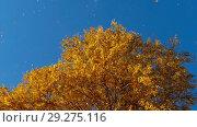Купить «Autumn trees with yellowing leaves against the sky», видеоролик № 29275116, снято 29 сентября 2018 г. (c) Игорь Жоров / Фотобанк Лори