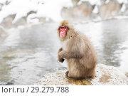Купить «japanese macaque or snow monkey in hot spring», фото № 29279788, снято 7 февраля 2018 г. (c) Syda Productions / Фотобанк Лори