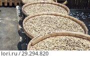 Купить «A row of the plates with raw beans of luwak coffee on the wooden table dries. Kopi luwak or civet coffee is one of the world's most expensive and low-production varieties of coffee», видеоролик № 29294820, снято 15 октября 2008 г. (c) Куликов Константин / Фотобанк Лори