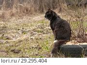 Купить «Черный пушистый кот сидит на старой автомобильной покрышке в саду», фото № 29295404, снято 21 апреля 2018 г. (c) Наталья Николаева / Фотобанк Лори
