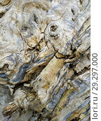 Closeup of texture background of an old oak tree bark. Стоковое фото, фотограф Сергей Бочаров / Фотобанк Лори