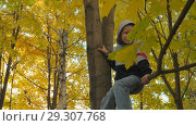 Купить «Autumn. Small children in the yellow leaves. Children play in the street with fallen leaves. Autumn grove of birches and maples. Happy kids on the street. Ray of sunshine breaks through the yellow foliage of maples. little boy sits on a maple branch with his legs hanging down. Camera in motion.», видеоролик № 29307768, снято 22 марта 2019 г. (c) Константин Мерцалов / Фотобанк Лори