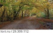 Купить «Красивый осенний лес и дорожка с опавшей листвой», видеоролик № 29309112, снято 13 октября 2018 г. (c) Яна Королёва / Фотобанк Лори