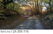 Купить «Дорожка в осеннем лесу», видеоролик № 29309116, снято 13 октября 2018 г. (c) Яна Королёва / Фотобанк Лори