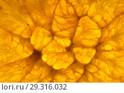 Купить «Fresh orange background», фото № 29316032, снято 18 ноября 2018 г. (c) Владимир Пойлов / Фотобанк Лори