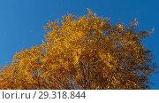 Купить «Autumn trees with yellowing leaves against the sky», видеоролик № 29318844, снято 29 сентября 2018 г. (c) Игорь Жоров / Фотобанк Лори