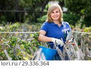 Купить «mature woman with tools in garden», фото № 29336364, снято 17 июня 2016 г. (c) Яков Филимонов / Фотобанк Лори