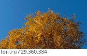 Купить «Autumn trees with yellowing leaves against the sky», видеоролик № 29360384, снято 29 сентября 2018 г. (c) Игорь Жоров / Фотобанк Лори