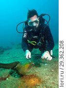 Купить «Diver takes off hook from Panamic Green Moray Eel, Gymnothorax castaneus, La Paz, Baja California Sur, Mexico», фото № 29362208, снято 17 декабря 2018 г. (c) age Fotostock / Фотобанк Лори