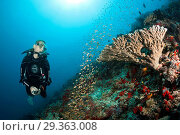 Купить «Scuba Diver on Coral Reef, Felidhu Atoll, Maldives», фото № 29363008, снято 16 декабря 2018 г. (c) age Fotostock / Фотобанк Лори