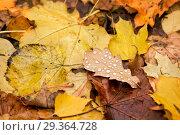 Купить «Листья осени Yellow-brown autumn leaves», фото № 29364728, снято 15 октября 2011 г. (c) Baturina Yuliya / Фотобанк Лори