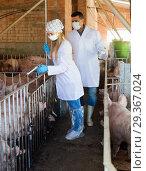 Купить «Veterinarians to make injection to pigs in sty», фото № 29367024, снято 24 марта 2019 г. (c) Яков Филимонов / Фотобанк Лори