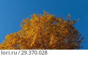Купить «Autumn trees with yellowing leaves against the sky», видеоролик № 29370028, снято 29 сентября 2018 г. (c) Игорь Жоров / Фотобанк Лори
