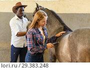Купить «Girl and man shearing horse with trimmer», фото № 29383248, снято 2 октября 2018 г. (c) Яков Филимонов / Фотобанк Лори