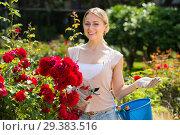 Купить «young female gardener caring roses», фото № 29383516, снято 22 апреля 2019 г. (c) Яков Филимонов / Фотобанк Лори