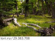 Купить «Woodland views», фото № 29383708, снято 1 февраля 2017 г. (c) Яков Филимонов / Фотобанк Лори