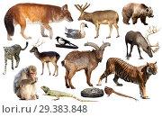 Купить «animal collection asia», фото № 29383848, снято 22 января 2019 г. (c) Яков Филимонов / Фотобанк Лори