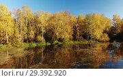Купить «Russian autumn landscape with birches, pond and reflection», видеоролик № 29392920, снято 25 апреля 2019 г. (c) Володина Ольга / Фотобанк Лори