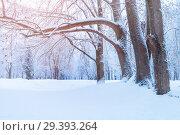 Купить «Winter landscape - frosty trees in winter forest in the sunny morning. Winter landscape with snowy trees. Tranquil winter nature in soft morning sunlight», фото № 29393264, снято 11 декабря 2017 г. (c) Зезелина Марина / Фотобанк Лори