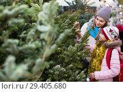Купить «Woman with daughter buying Christmas tree in market», фото № 29405680, снято 19 января 2019 г. (c) Яков Филимонов / Фотобанк Лори