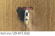 Купить «Aerial view of modern combine harvesting wheat on the field. Flying directly above combine.», видеоролик № 29411632, снято 15 сентября 2018 г. (c) Андрей Радченко / Фотобанк Лори