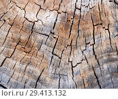 Купить «Текстура старого древесного спила пня дерева», фото № 29413132, снято 20 июня 2018 г. (c) Вячеслав Палес / Фотобанк Лори
