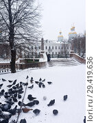 Купить «Sainkt Petersburg in the winter. A flock of pigeons on the embankment of Griboyedov Canal. Red Guard Bridge (Krasnogvardeysky Bridge) in snowfall», фото № 29419636, снято 26 января 2016 г. (c) Виктория Катьянова / Фотобанк Лори