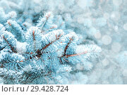 Купить «Winter landscape. Blue pine tree branches under winter snowfall, closeup of winter nature, free space for text», фото № 29428724, снято 11 декабря 2017 г. (c) Зезелина Марина / Фотобанк Лори