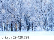 Купить «Winter landscape - frosty forest trees in winter forest in cold weather. Tranquil winter forest nature under snowfall», фото № 29428728, снято 11 декабря 2017 г. (c) Зезелина Марина / Фотобанк Лори