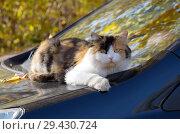 Купить «Кошка лежит на капоте автомобиля осенним солнечным днем», фото № 29430724, снято 14 октября 2018 г. (c) Елена Коромыслова / Фотобанк Лори